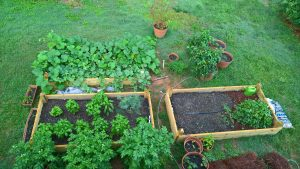 Raised beds June 6